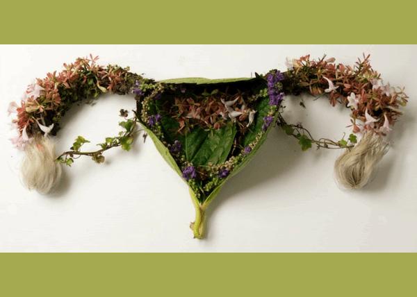 Gine-Ecologia Natural